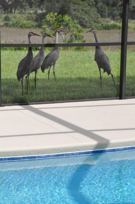 Watersong Cranes